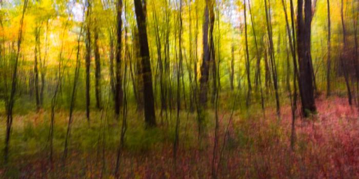 Woodland Study #72