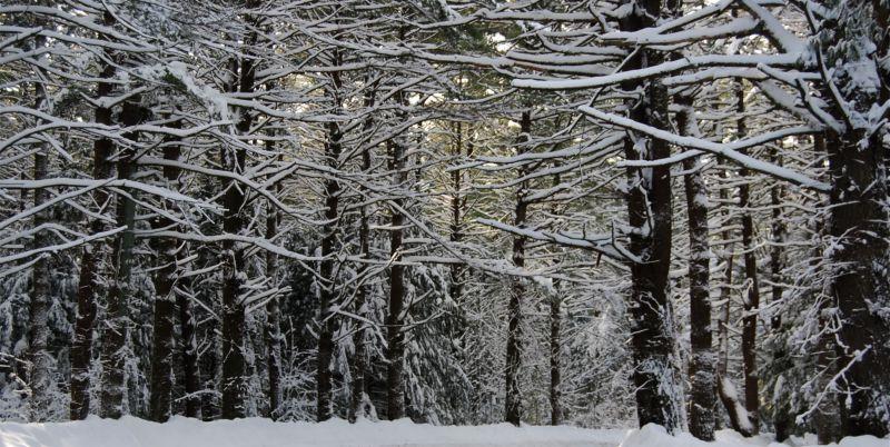 White Memorial Foundation, Winter Wonderland, Litchfield